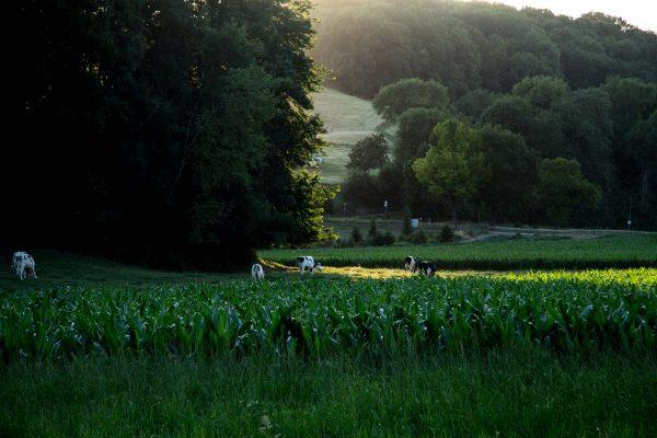 fotografie website heuvelland